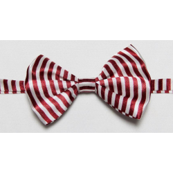 Dogs and cats bow tie
