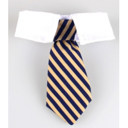 Tie for dogs and cats Yellow and royal bleu stripes with white collar