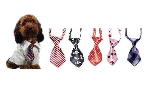 cravates-chiens